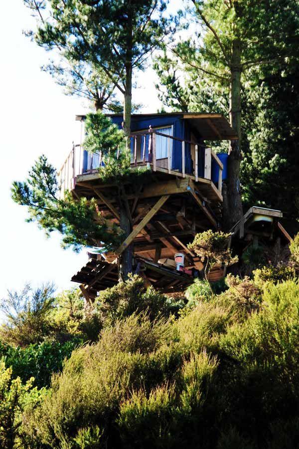 Green tree house  in Palmerston North, New Zealand - treehouse architect Jono  Williams