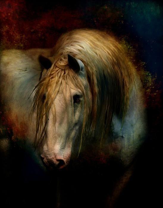 """Grey Dignity"" digital art/photograph by Dorota Kudybe"