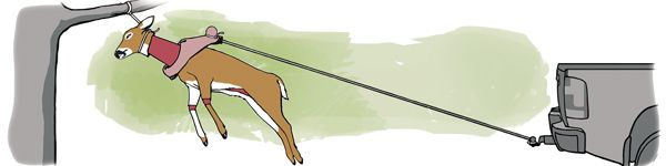 The Golf Ball Method: How to Skin a Deer in Less Than Five Minutes - Petersen's Hunting