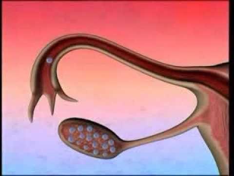 ▶ Human Egg Cell - YouTube