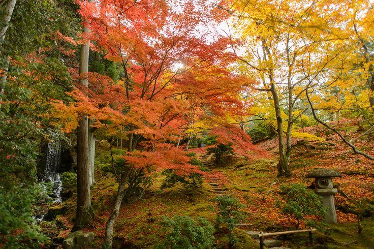 Kyoto Photo: Fall Foliage At Shugakuin Rikyu Imperial Villa