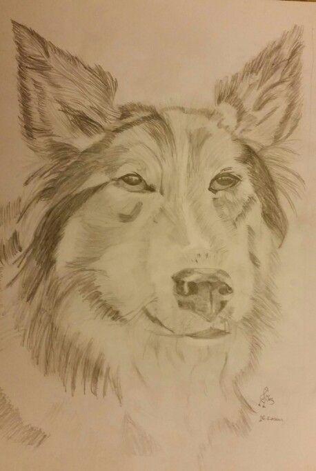 Karakalem köpek KeLeBeK