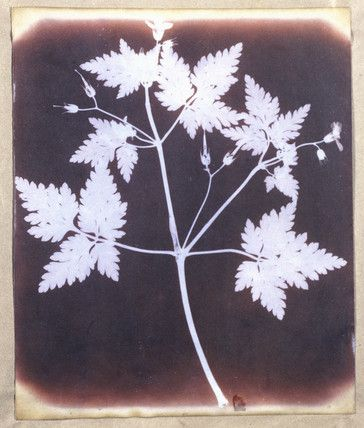 Salted paper print from a calotype negative by William Henry Fox. Talbot (1800-1877).