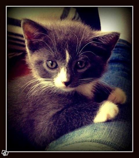 Oemotståndligt söt kattunge