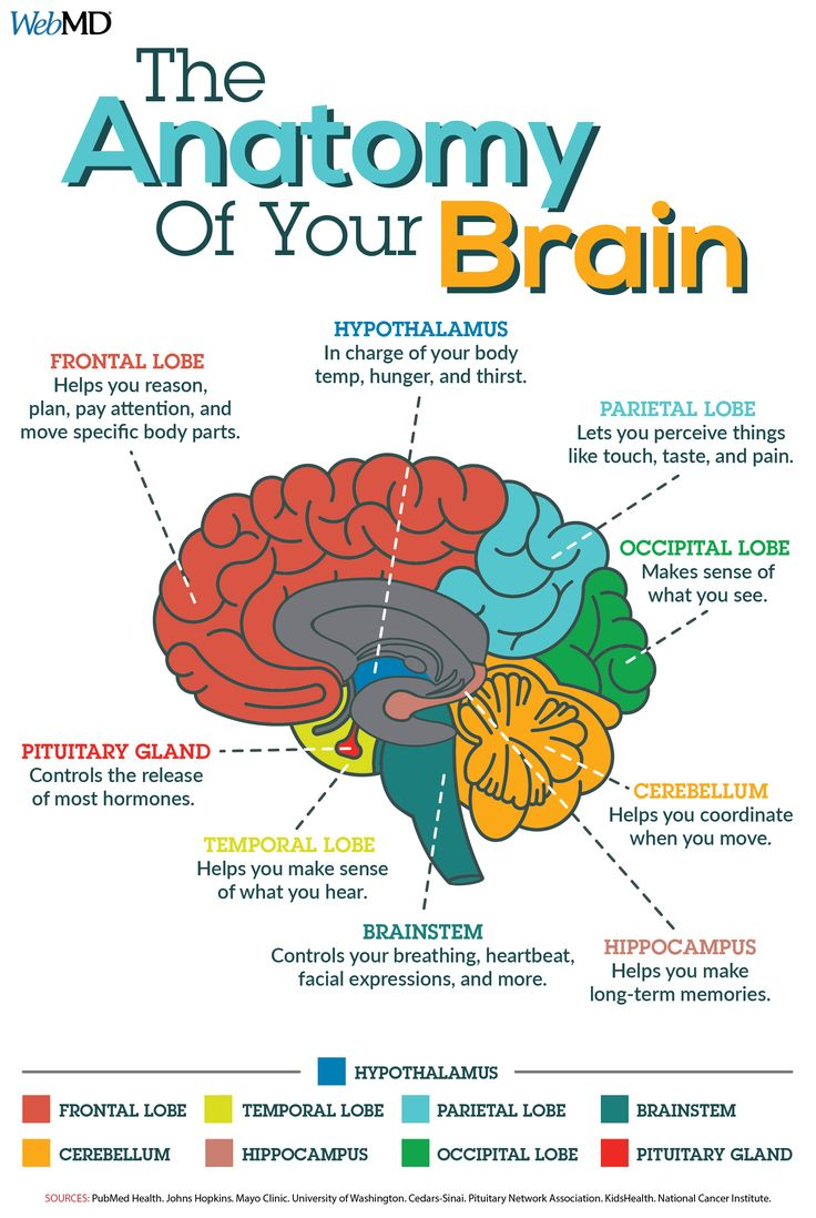 Brain Myths and Facts | Learning science, Brain facts ...