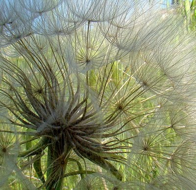 the most amazing shot! inside a seed pod!