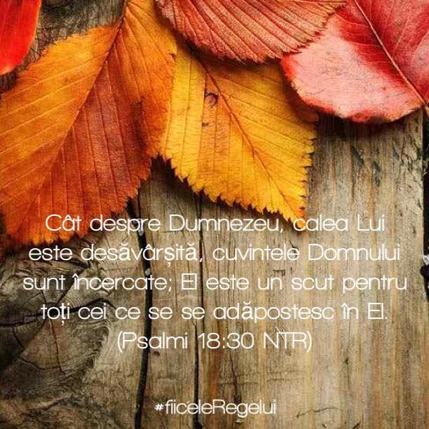 #fiiceleRegelui #incurajare #Biblia
