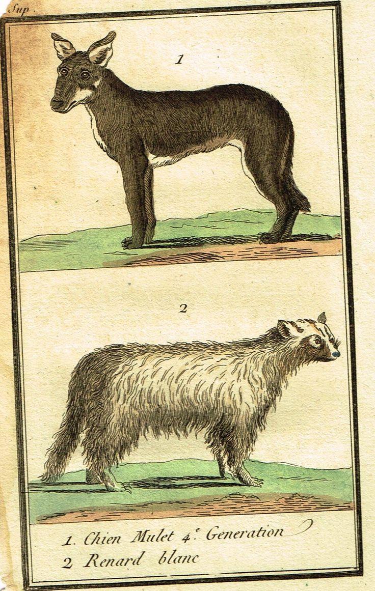 "Buffon's Histoire Naturelle - ""CHIEN MULET & RENARD BLANC - (DOG VARIETIES)"" - Copper Engraving - 1799"
