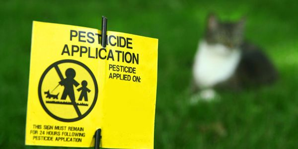 petitie: Children's Health is More Important Than Perfect Lawns - Prohibit the Use of Dangerous Pesticides on School Grounds!