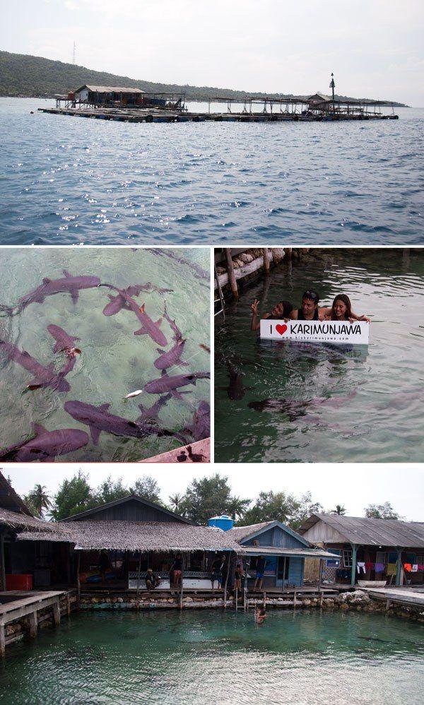 Shark swimming!  PTX Studio in Karimunjawa, Indonesia