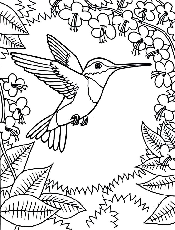 Printable Hummingbird Coloring Pages