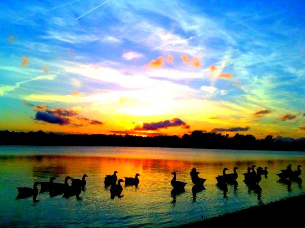 25 Best Parks Amp Rec Images On Pinterest Virginia Beach