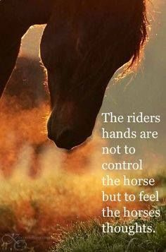 The riders hands are not to control the horse but to feel the horse's thoughts.