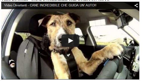 auto: Video Divertenti - CANE INCREDIBILE CHE GUIDA UN' AUTO