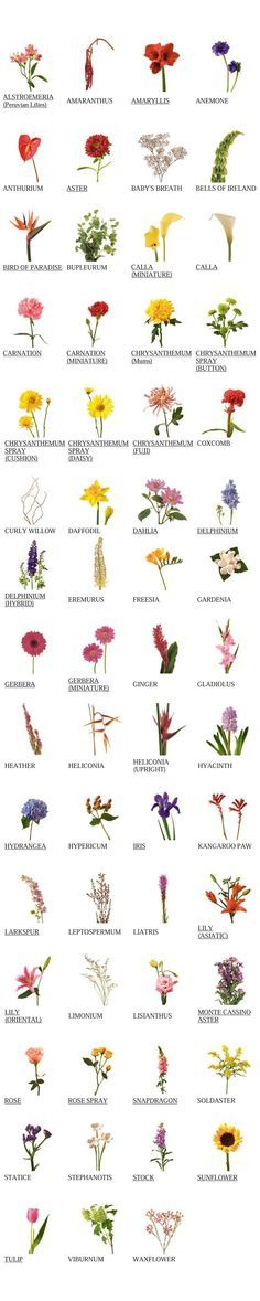 175 best passionhorticulture images on pinterest gardening flower glossary view names images of flowers mightylinksfo