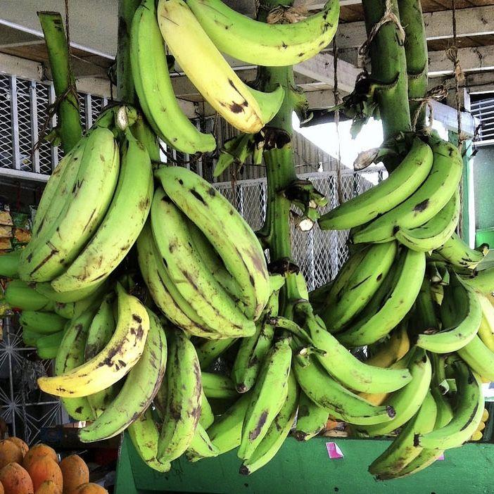 Por Asociación Americana de la Diabetes Algunas personas prefieren cocinar el plátano en el caldo, luego lo remueven, lo muelen, y lo regresan a la sopa. Porciones: 6 Tamaño de una Porción: 1 taza …