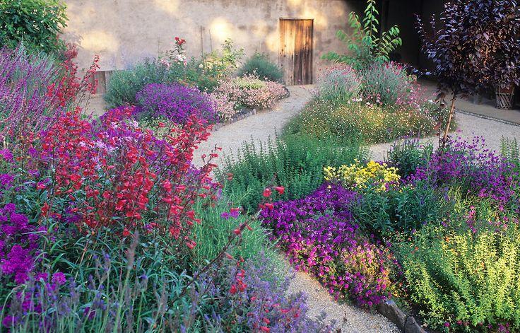 Colorful Perennial Garden With Verbena Salvia Penstemon
