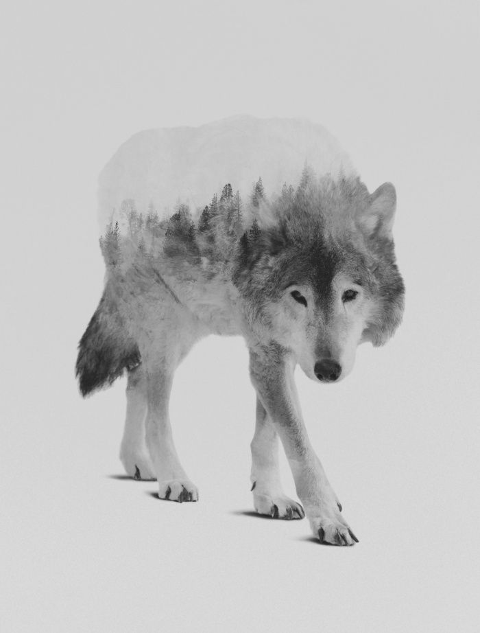 Wolf in the woods black white version art print by andreas lie