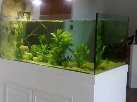 Les 25 meilleures id es de la cat gorie aquarium d 39 eau for Eau douce aquarium