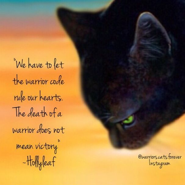 How Many Warriors Books By Erin Hunter Are There: 174 Best Images About HOLLYLEAF! On Pinterest