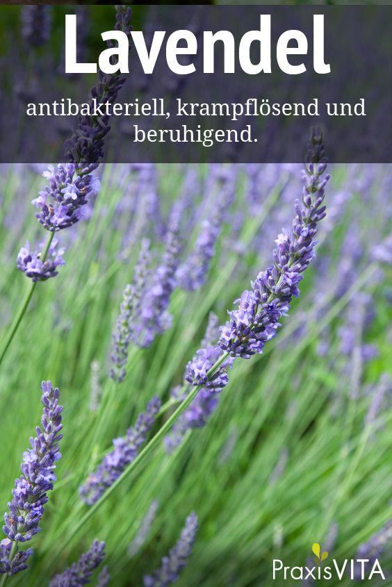 Lavendel – natürliche Hilfe gegen Kopfschmerzen PraxisVITA