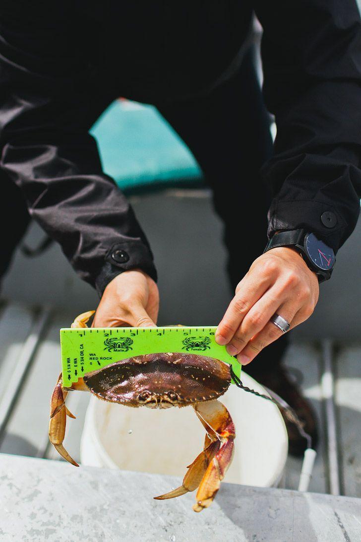 How to Catch Dungeness Crab Oregon - Oregon Coast Crabbing // Local Adventurer #oregon #oregoncoast #traveloregon #crabbing