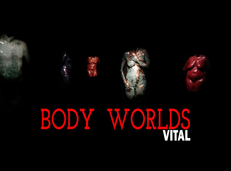 We had a chance to checkout the BODYWORLDS: Vital exhibit at the Telus Spark Science Centre, and take pictures! See within.