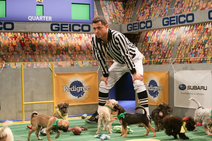 A complete guide to Puppy Bowl XI Puppy bowls, Dog