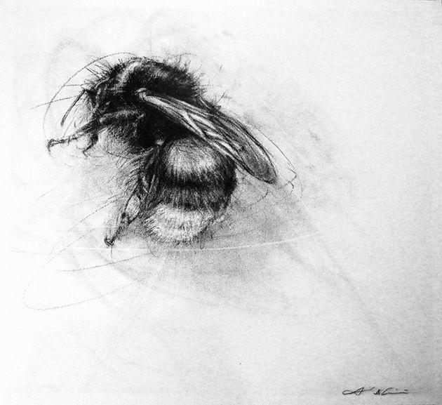 Alleine bei denHonigbienen gibt es 7Arten und sie sind weltweit verbreitet. Auch die Hummeln gehören zur Familie der Bienen und sind eine große Leidenschaft vonApril Coppiniaus Oregon. Sie fing an die kleinen Tierchenzu zeichnen, als sie vom starken Rückgang der Insekten erfuhr. So hat die Künstlerin über die Jahre über ...