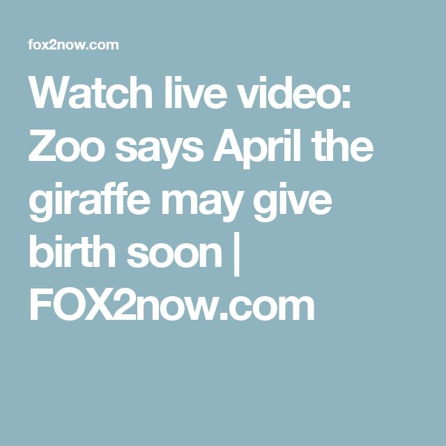 Watch live video:  Zoo says April the giraffe may give birth soon | FOX2now.com