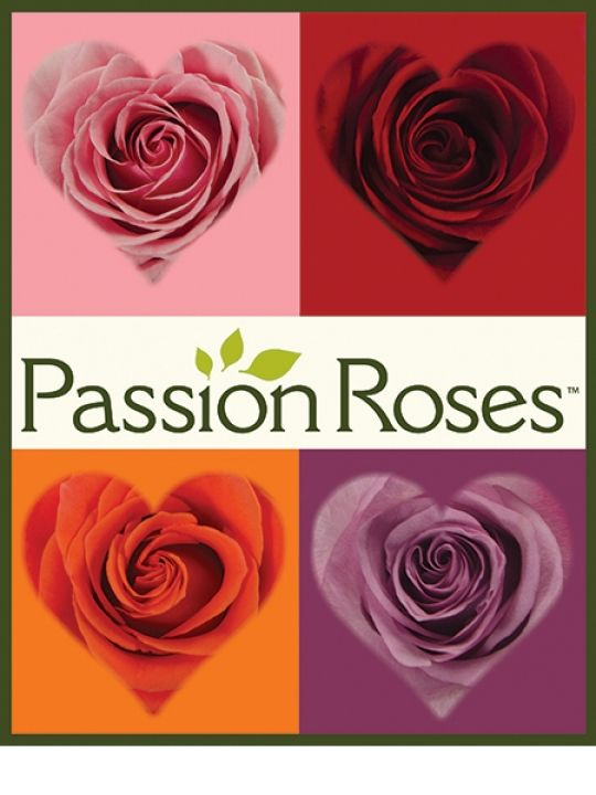 Win A Dozen Hand-Picked Roses! Expires:  February 25, 2015 | Eligibility:  United States | 18+ Click to enter!