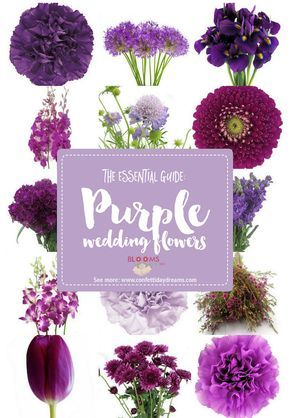 Looking for purple wedding flower names and ideas with pics + seasons? Save the purple flower guide: http://www.confettidaydreams.com/purple-wedding-flowers-names/