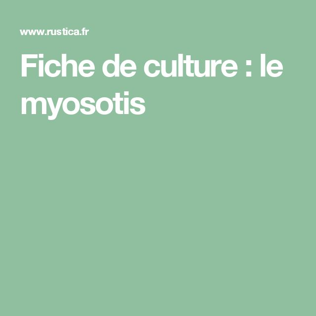 Fiche de culture : le myosotis