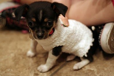 puppy sweater from old sock...