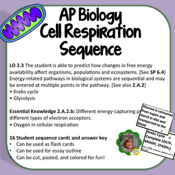 Here is a great cell respiration resource for AP Biology.  It's a 2-page handout with  cards that sequence glycolysis, pyruvate conversion to Acetyl CoA, Krebs Cycle, Electron Transport Chain, and Chemiosmosis.  Students take the events of cell respiration and add of breathing, eating, making ATP, and exhaling carbon dioxide.