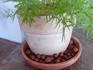 Hygrométrie des plantes d'intérieur