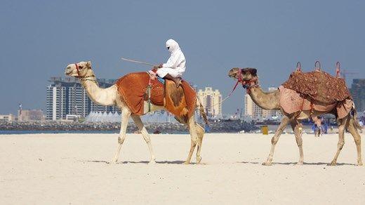 Hopp på kamelen og ri gjennom rød, endeløs ørkensand på kameltur i Dubai http://travels.kilroy.no/destinasjoner/midtosten/forente-arabiske-emirater/dubai