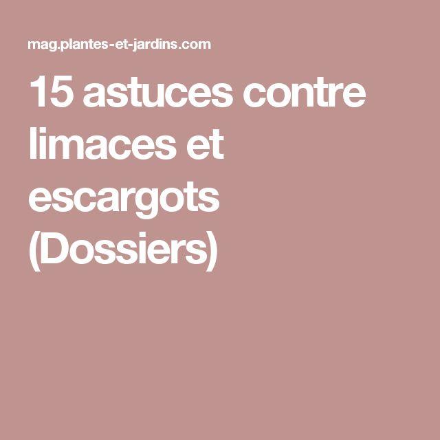 15 astuces contre limaces et escargots (Dossiers)