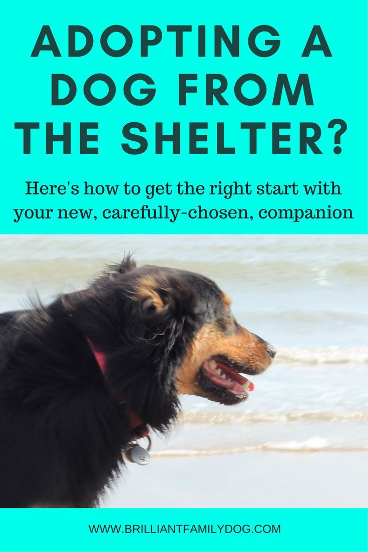 So You Want To Rescue A Dog Read This First Dog Training