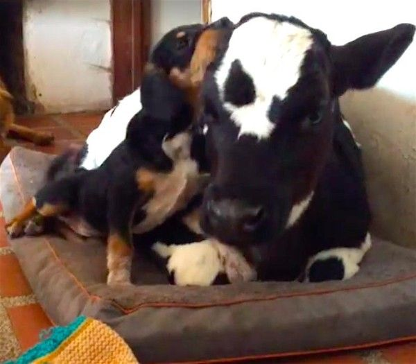 The Best Rescue Puppies Ideas On Pinterest Puppy Shelters - These two stray puppies were just rescued and they refuse to stop hugging each other