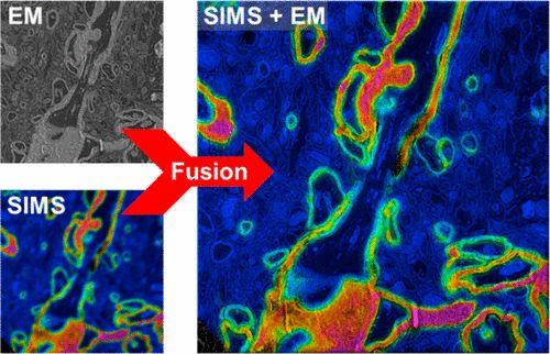 #AChem: Correlative Microscopy Combining Secondary Ion Mass Spectrometry and Electron Microscopy: Comparison of… #MassSpec