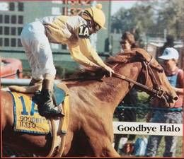 Goodbye Halo, chestnut daughter of Halo and half-sister to Sunday Silence, was trained by Charlie Whittingham.  Goodbye Halo won the  1987 Demoiselle Stakes, Hollywood Starlet and 1988 Santa Ynez Stakes, Las Virgenes Stakes (when she defeated future Santa Anita Derby and Kentucky Derby winning filly Winning Colors by a head) Kentucky Oaks and Mother Goose, and 1989 El Encino Stakes, La Canada Stakes and the Chula Vista Handicap, in which she defeated 1989 & 1990 Champion Older mare Bayakoa.