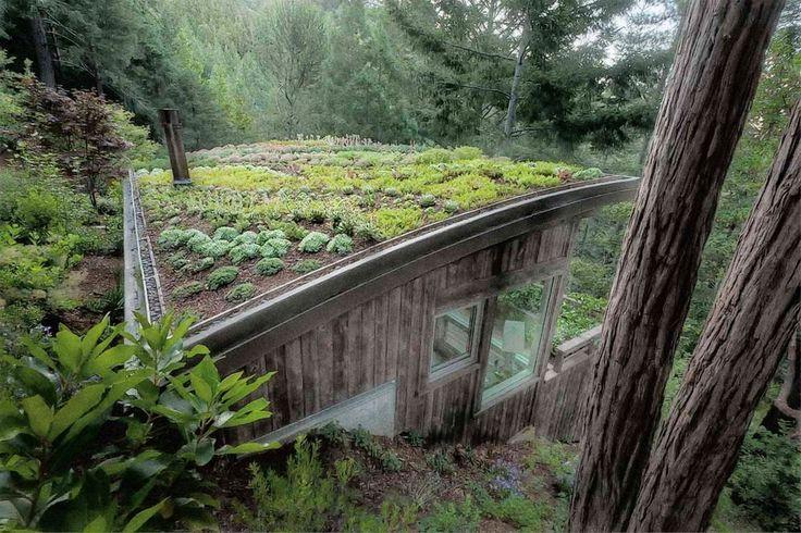 Зеленые крыши -  решение проблем экологии города