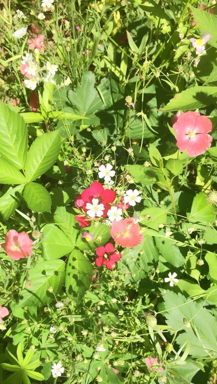Wildflowers at aura