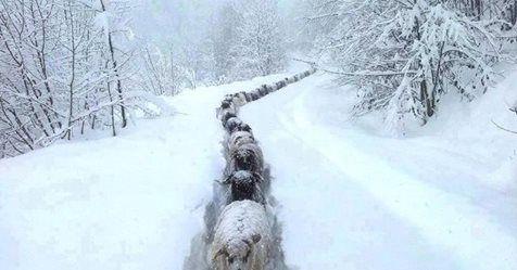 Μωσαϊκό: Eικόνες από τη χιονισμένη Κρήτη