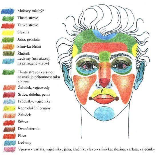 Jaké orgány stimulujeme masáží obličeje?