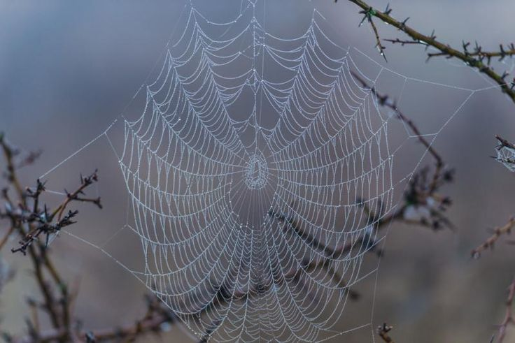 Spider venom protein could protect the brain from stroke-induced damage by preventing acid build up.