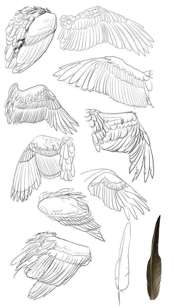 крылья рисунок карандашом причина поиска