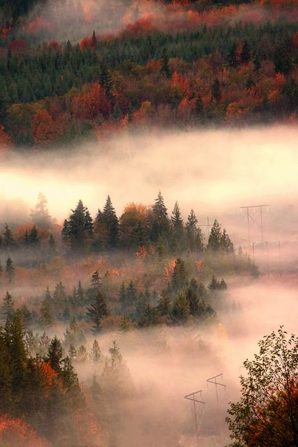 Autumn Mist,Sunshine Coast, British Columbia, Canada