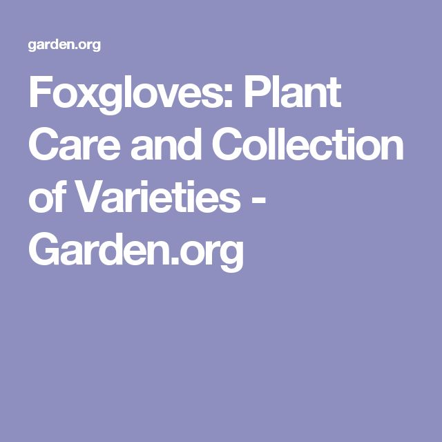 Foxgloves: Plant Care and Collection of Varieties - Garden.org